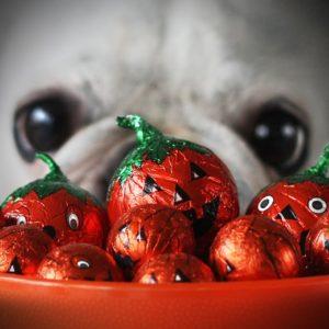 chien halloween dangers